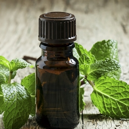 The Benefits of Mint